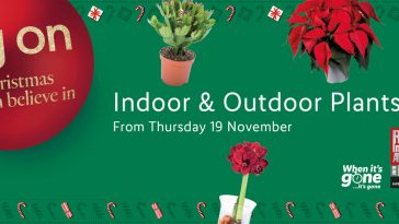 Preview LIDLIndoor & Outdoor Plants Offers for your garden valid from 19.11.2020