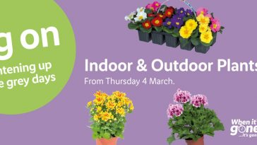 LIDL Indoor & Outdoor Plants Offers from Thursday, 4th March 2021
