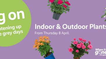 LIDL Indoor & Outdoor Plants Offers from Thursday, 8th April 2021