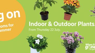 PreviewLIDL Indoor & Outdoor Plants Offers from your garden valid from 22/7/2021