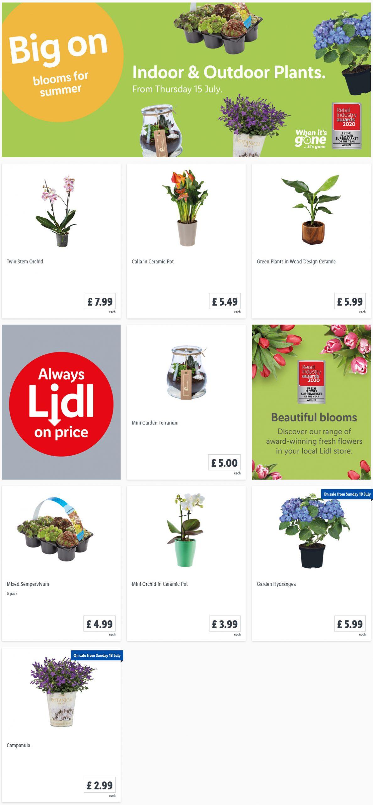 Preview LIDLIndoor & Outdoor Plants Offers for your garden valid from 15/7/2021