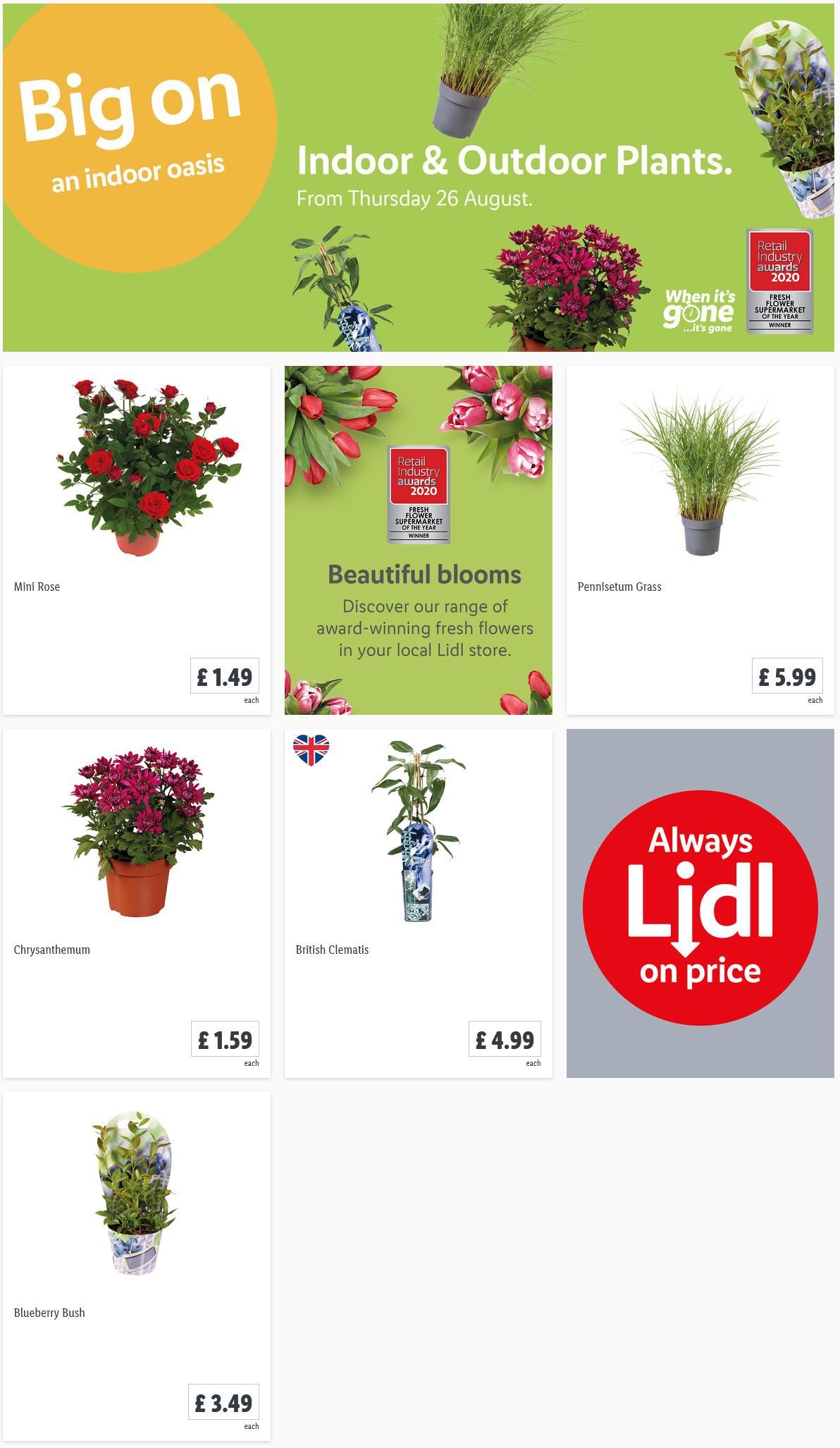 Preview LIDLIndoor & Outdoor Plants Offers for your garden valid from 26/8/2021